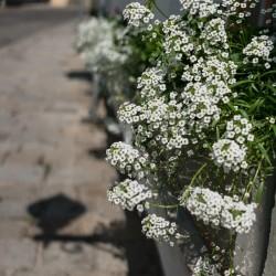 Букети от аромат в Гринциг